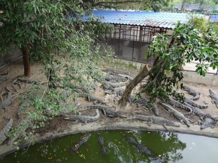 Крокодилы в тигровом зоопарке